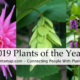 2019 Plants of the Year