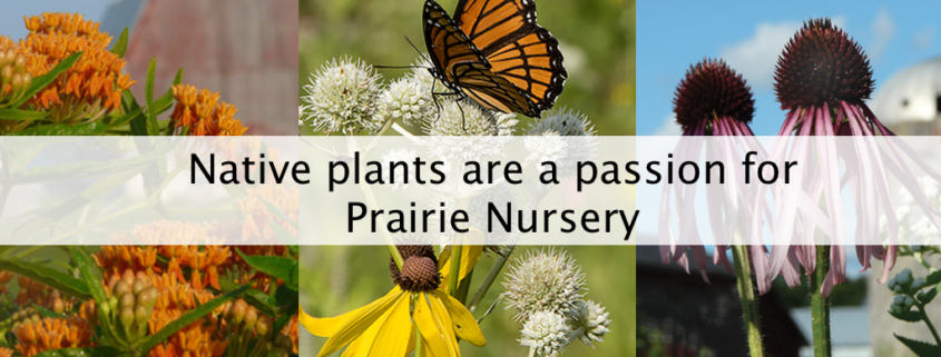 Native plants are a passion for Prairie Nursery
